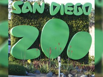 The Ultimate Guide to Saving Money on Your Trip to the San Diego Zoo
