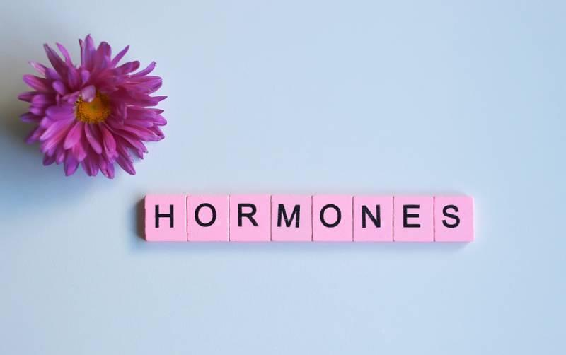 Word 'hormones' written on wooden cubes