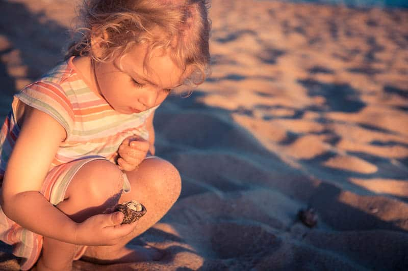 Three year old blond girl playing with shells on the beach