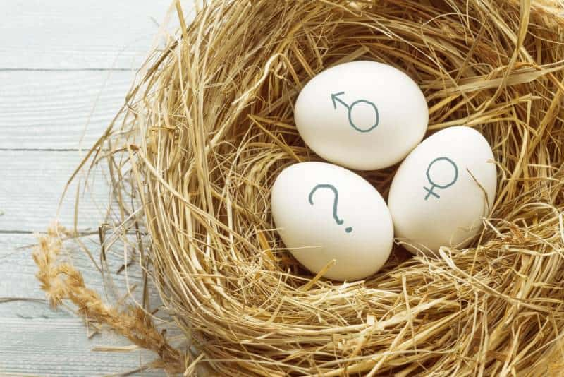 Eggs with symbols of genders and question mark