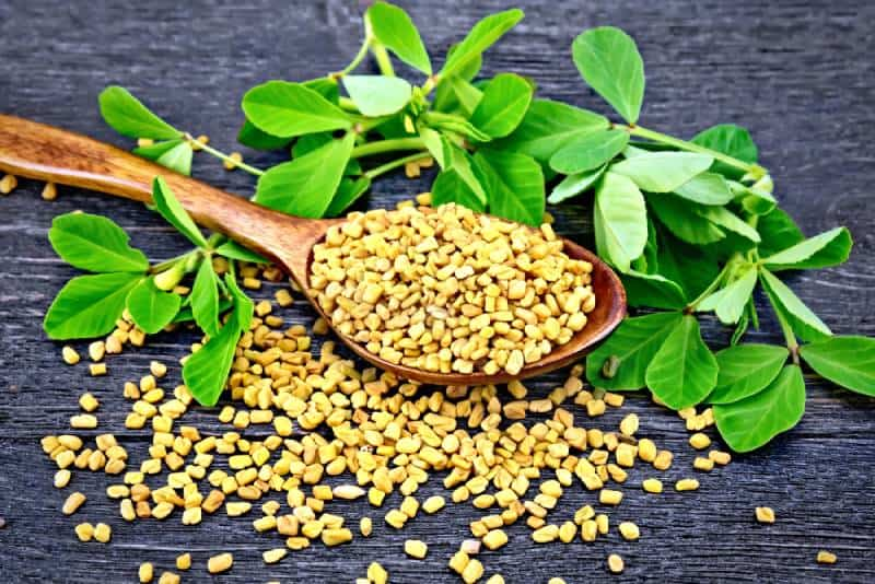 Fenugreek seeds in a spoon