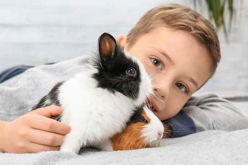 Cute boy with funny guinea pig