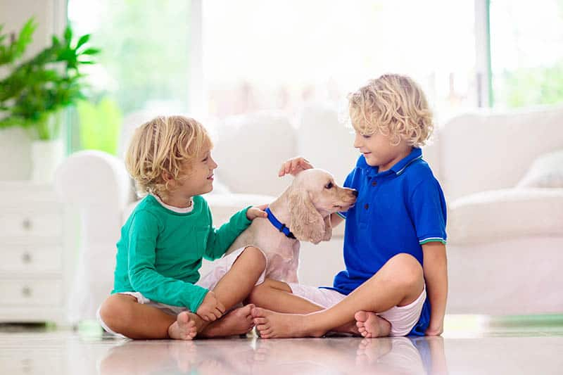 Two boys brothers playing with pet dog
