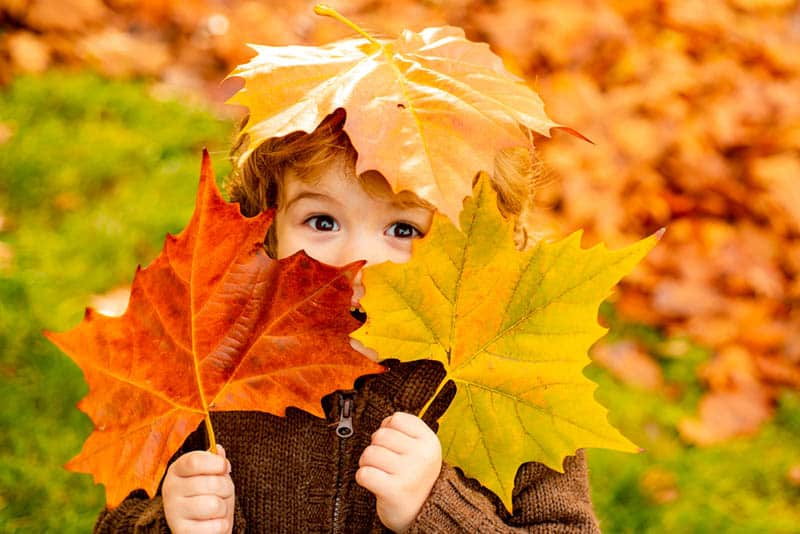cute little boy covering his face with autumn leaves in the park