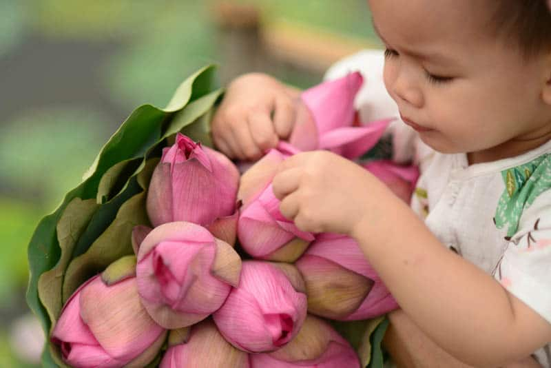adorable little boy holding a bouquet of lotus flowers