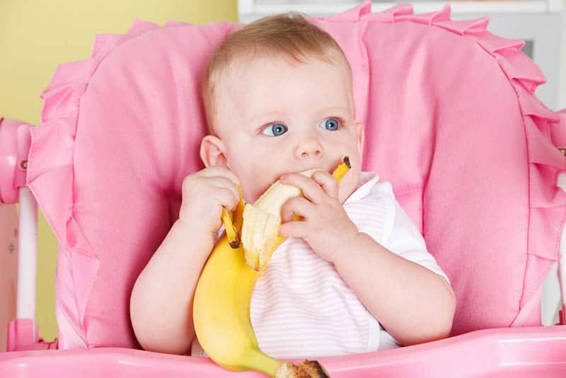 cute baby girl sitting in a pink high chair and eating a banana