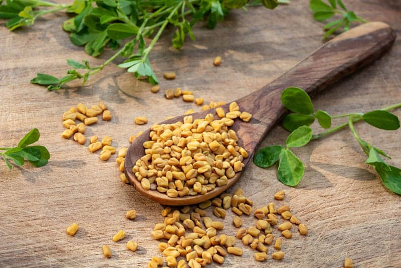 fresh fenugreek seeds in a wooden spoon on the table with green plants