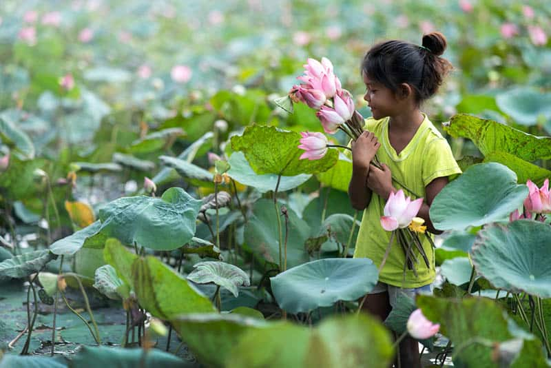 happy little girl picking up lotus flowers in the river