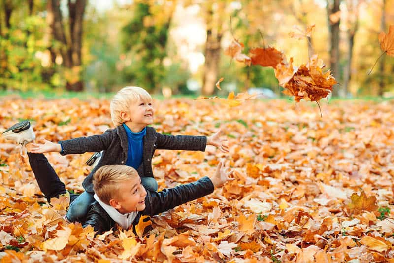 cute brothers playing in autumn leaves in the park