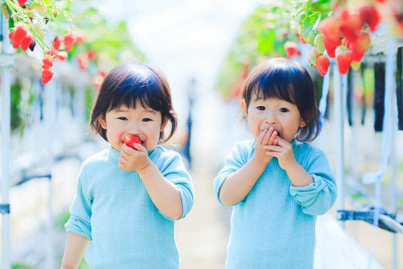 adorable twin girls eating strawberries outdoor