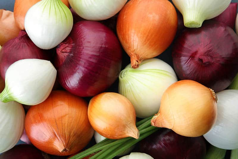 fresh colorful onions on the bunch