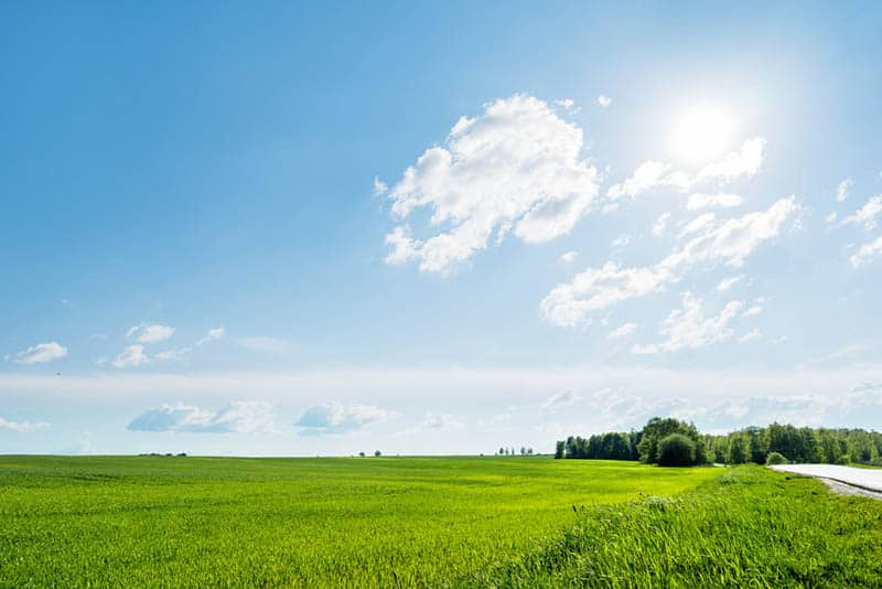 Countryside field on beautiful sunny day