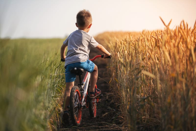 boy rides a bicycle along the countryside