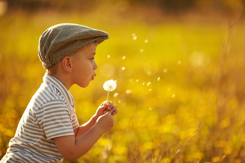 cute little boy blowing the dandelion in the field