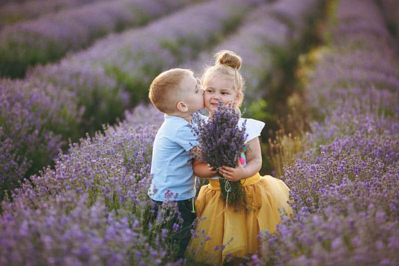 cute little boy kissing a girl in the lavender field