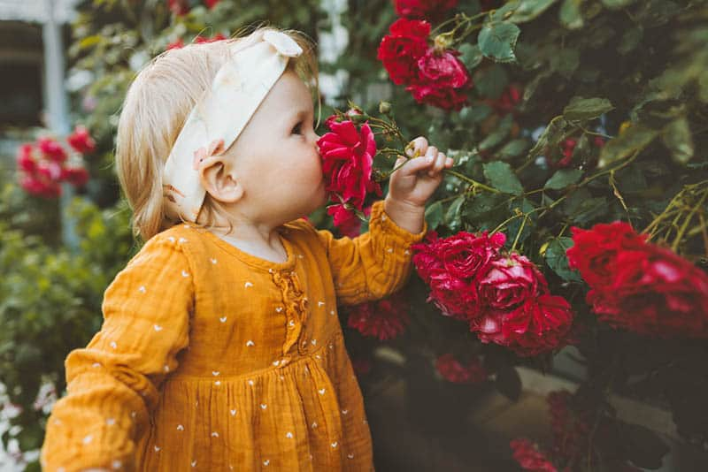 cute little girl smelling the roses in the garden