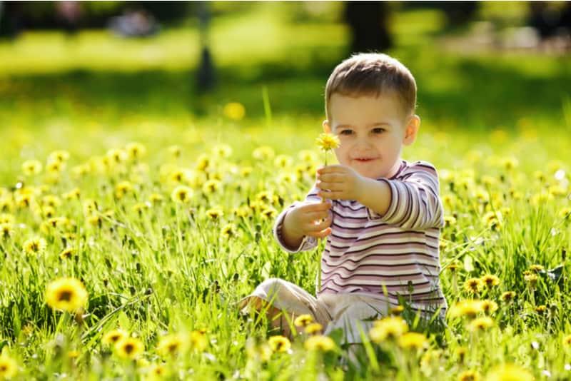 baby boy on the dandelion meadow